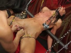 Queensnake.com - Stretched 2