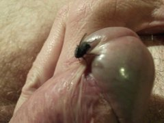 fun with the fly HD video 24
