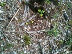 Abspritzen im Wald
