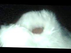 Fingering in fur