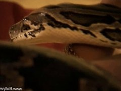 Bollywood and The Sexy Snake