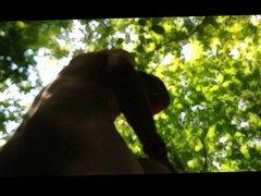 petit tour dans les bois