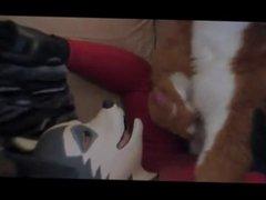 rubber husky having fun