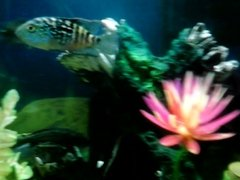 video of my fishes
