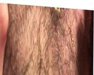 Pecho peludo, furry chest