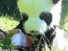 Weird panda plush action in open field