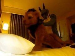 Husky Nipr On Ari - Humpings
