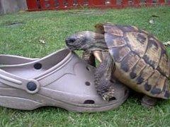 Sexy Turtle stud bangs hot teen shoe