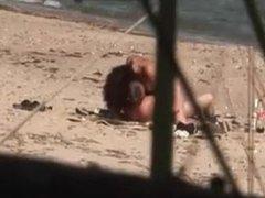 My collections 21 voyeur making sex on beach - DATES25.COM