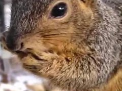 Squirrel Gets Freaky With NUTS