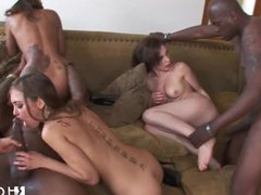 HOTGOLD Rocco Pornstars Interracial Orgy