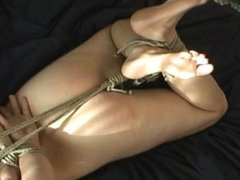 Hogtied, Ballgaged, and Vibed