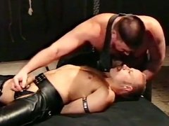 Leather Bears at Play