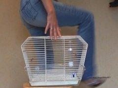 Butt crushing cagebirdcagebird crush