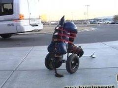 Human butt trailer