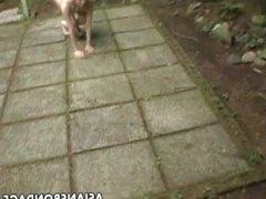 Japanese Girl Bondage as a Dog - More free videos on SEXGIRLPORNCAM.com