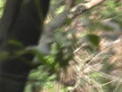 rừng già trung quốc 14
