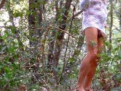 dans les bois 2