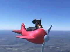 Dog of Wisdom gives amazing solo