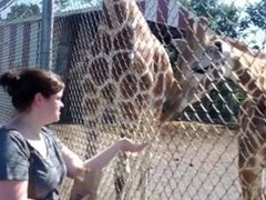 My sexy wife takes it up the arse from a giraffe