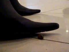 Snail crush 6