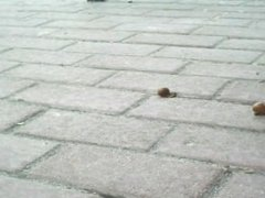 Snail crush 26