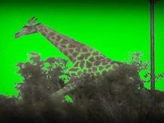 Hot Blonde Deepthroats Giraffe Cock