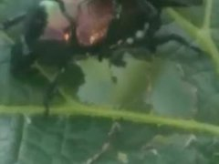 Young bugs get fucked hard by BBC
