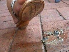 crush snail flat