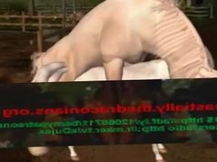Mating white horse