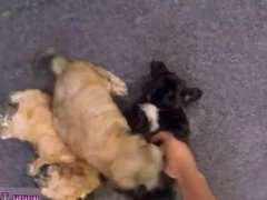 Blonde teen riding black first time Puppy