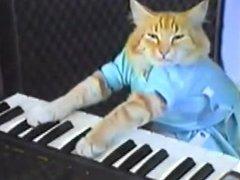 Gato tocando el piano bien prron :V