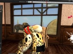 cheetah finds a pink herm