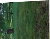 In the evening in the park