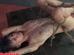 Bound bdsm sub gagged and clamped by maledom