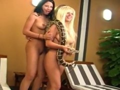 Naked Babes with Snake