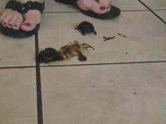 Anushka Flipflop Beetles