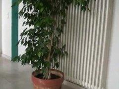 Girl pissing in the flower pot
