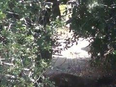 Unaware brunette bendover peeing in nature