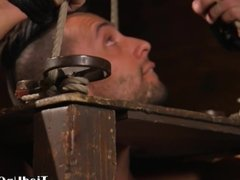 Suspended bdsm sub caged for cock tugging