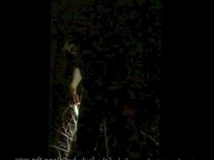 Selfbound to a tree at night.