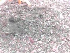 Culote Guango en slow motion