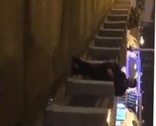 Rusos follando en publico en un puente