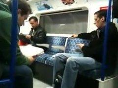 hot bear on the train