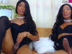 Latina shemale couple handjob big cocks Cam