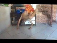 Skinny Latino Twink Twerk and dance 2