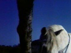 A menina e o Cavalo (1983) Dir: Conrado sanches